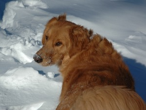 2011 January Snowstorm 061