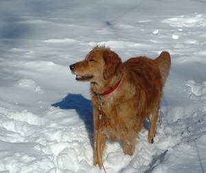 2011 January Snowstorm 074